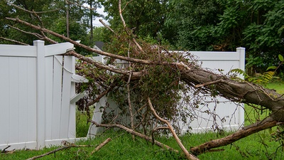 Are Your Trees Ready for Florida's Thunderstorms?