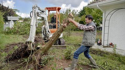 Do You Need a Permit in Florida to Prune or Remove Trees?