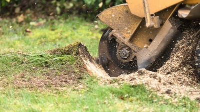 Stump Grinding VS Stump Removal.