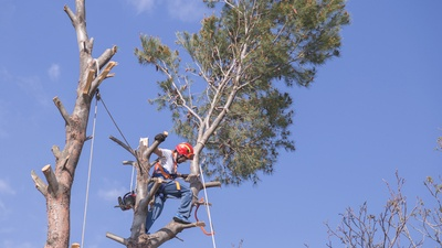 Why You Should Hire a Licensed and Insured Tree Trimmer in Lake County.
